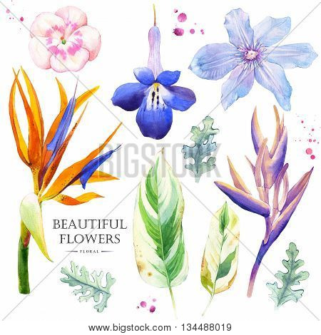 Watercolor collection of blue flowers, strelitzia, geranium and clematis. Handmade painting on a white background.