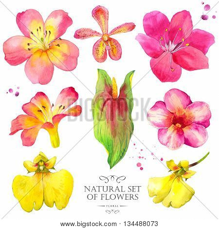 Watercolor collection of orchid, anthurium and lily. Handmade painting on a white background.