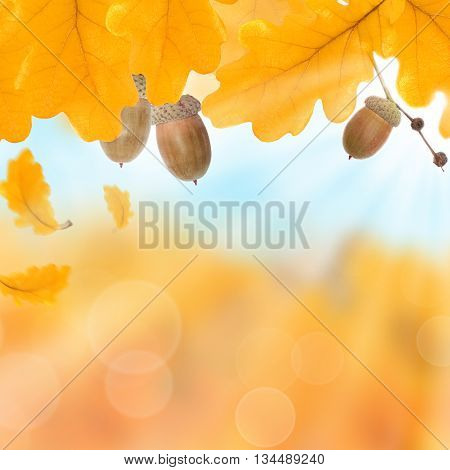 Autumnal Orange leaves autumn background and blue sky