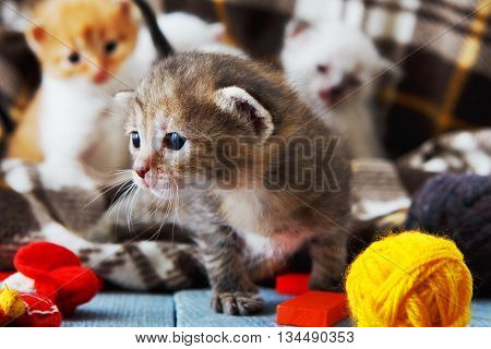 Kittens and mittens. Grey, white and ginger newborn kittens in a plaid blanket. Sweet adorable tiny kittens on a serenity blue wood play with cat toy and mittens. Funny kittens crawling and meowing