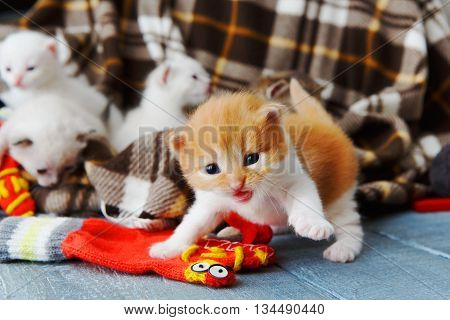 Kitten and mittens. Ginger orange newborn kitten near a plaid blanket. Sweet adorable tiny kitten on a serenity blue wood background play with mitten. Funny kitten crawling and meowing