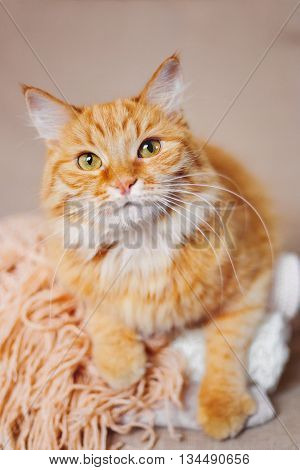 Cute ginger cat lies on pile of knitted woolen clothes. Warm knitted sweaters and scarfs are folded in heap. Cozy home background with fluffy pet.