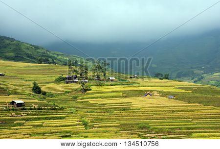 landscape, terraces, Mu Cang Chai high mountains, Yen Bai province, grain season