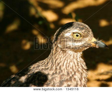 Camouflaged Bird