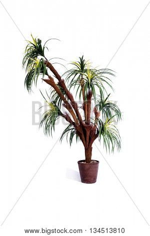 Artificial palm tree isolated on white background