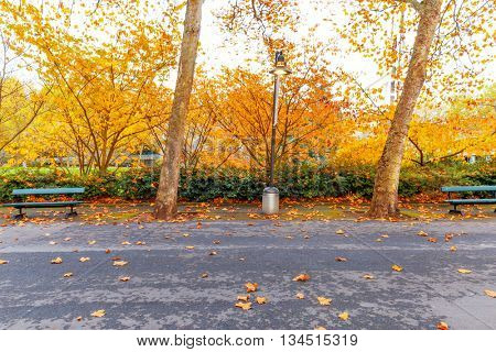 beautiful trees with yellow leaves by road near park