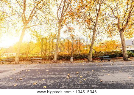 beautiful trees with yellow leaves by road near park with sunbeam