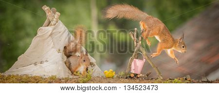 young red squirrel in a teepee with a fire place with older squirrel jumping of with blurry feet