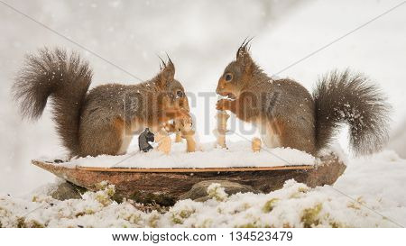 close up of red squirrel playing chess in the snow while snowing