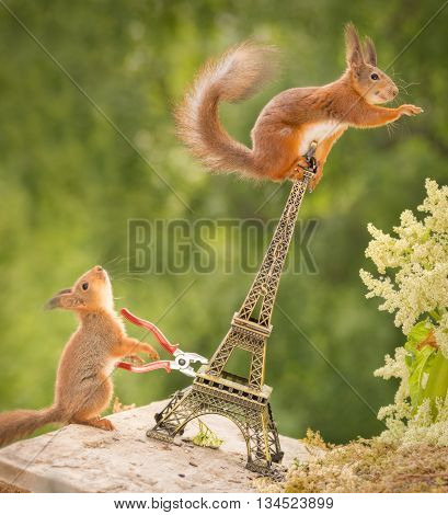 red squirrel in eiffel tower waving with a young one beneath with a tool