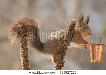 red squirrel standing on flower stem with bucket