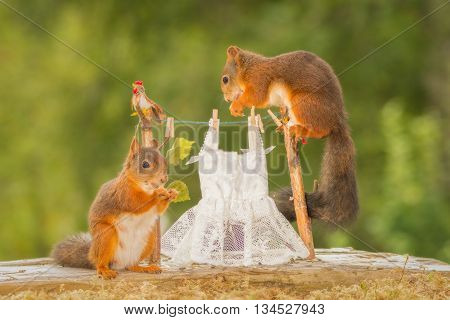 red squirrels standing on clothesline with wedding dress