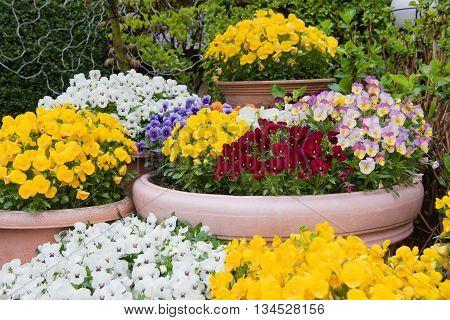 Beautiful flowers, colorful flower background closeup park