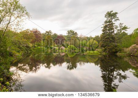 Asticou Azalea Gardens - Maine
