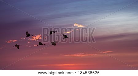 Birds flying against evening sunset in the background environment or ecology concept panoramic view