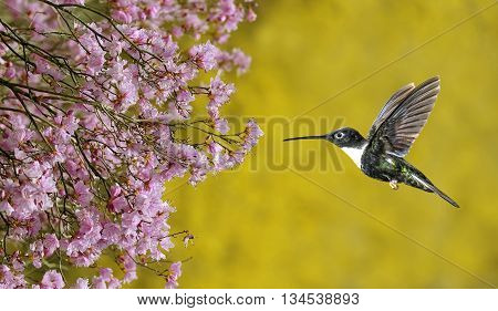 Hummingbird hovering over bright yellow summer background