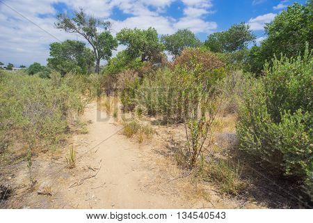 Trail To Desert Woods