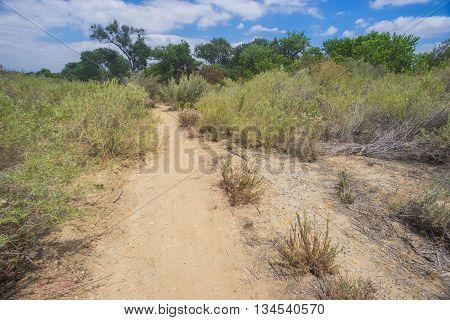 Sandy desert walking path through California's Mojave Desert.