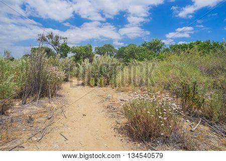 Trail Through Mojave Desert