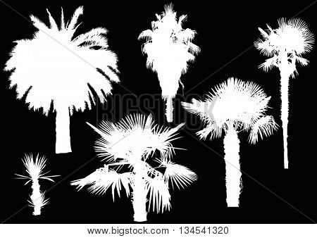illustration with palm trees isolated on black background