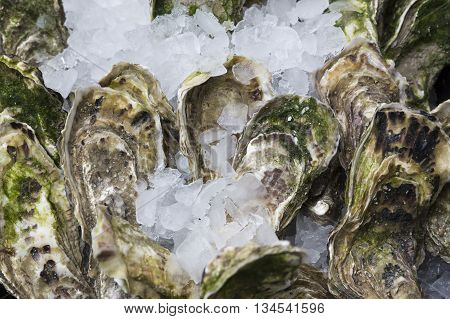 Fresh oysters on ice on display on a market