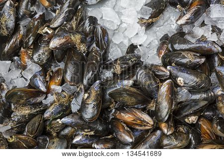 Fresh mussels on ice on display on a fish market