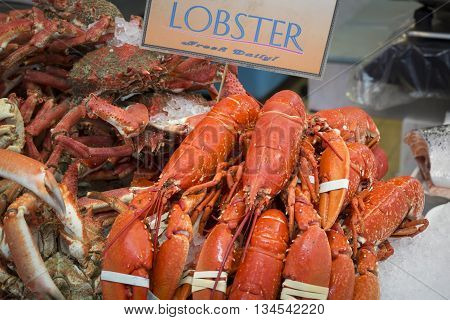 Fresh whole raw lobster on ice, closeup