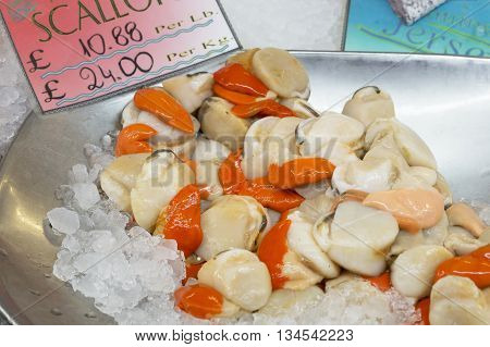 Fresh scallops in a metal bowl on ice