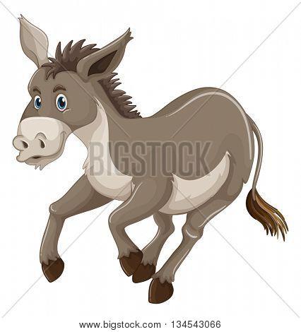 Donkey with gray fur illustration