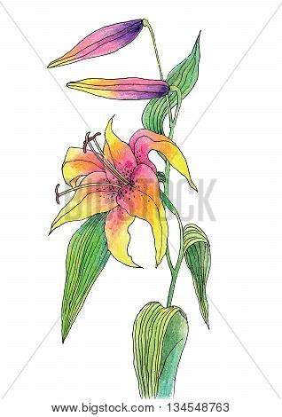 Vector illustration of Beautiful color lily on white background