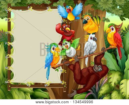Frame designs with wild birds and monkey illustration