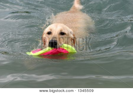 The Dog Playing In The Water