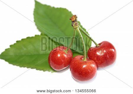 Three sweet cherries on a white background
