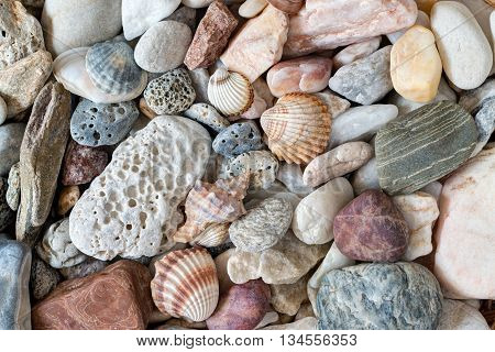 Detail of the pebble stones and scallops and shells