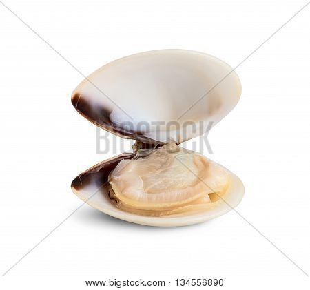 Fresh opened clam shell isolated on white background