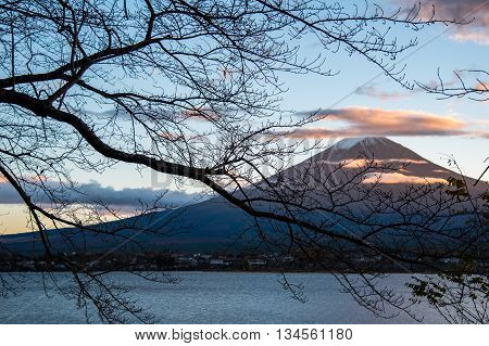 Beautiful view of Mount Fuji through branches of trees at Lake Kawaguchi in autumn This mountain is an famous natural landmark of Japan