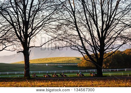 Race horses riders training track action morning landscape.