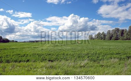 Beautiful rustic landscape with ground road runs through a green field  to forest on sunny summer day