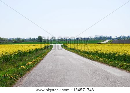 Country road at spring through yellow blossom canola fields