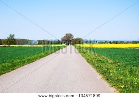 Country road in a bright spring colored rural landscape
