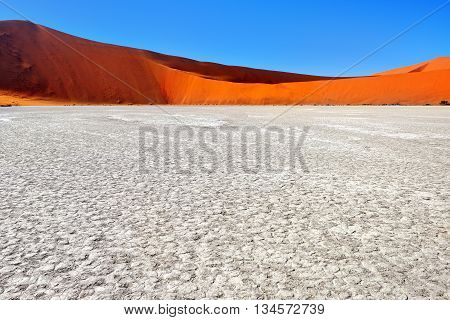 Deadvlei or Dead Vlei a white dry terrain pan and big red dunes at morning time in Sossusvlei inside the Namib-Naukluft Park in Namibia Africa