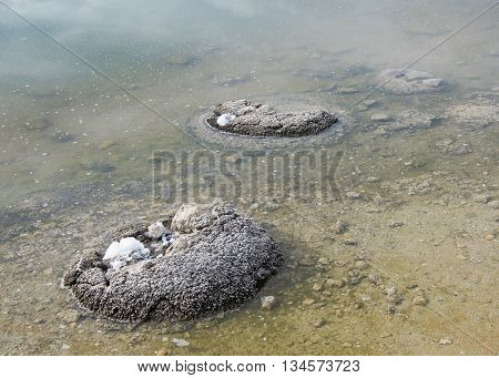 Stromatolites in the shallow saline waters at Lake Thetis in Western Australia.