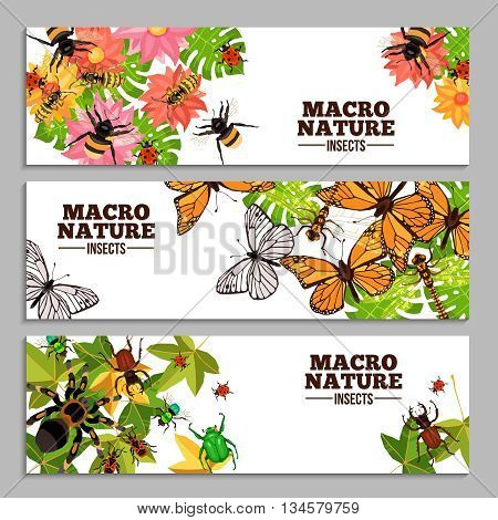 Insects horizontal banners of wasps butterflies bugs beetles and others on flowers and leaves doodle vector illustration