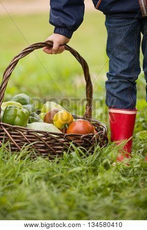 Little boy holding basket with organic vegetables on the green grass. Outdoors. freshly harvested vegetables. raw vegetables in wicker basket in child's hands. summer garden background.