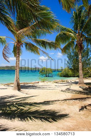 Palm tree and white sand beach on the tropical island. Philippines.