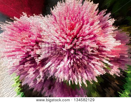 A Thorny Bush Of Pink Flowers.