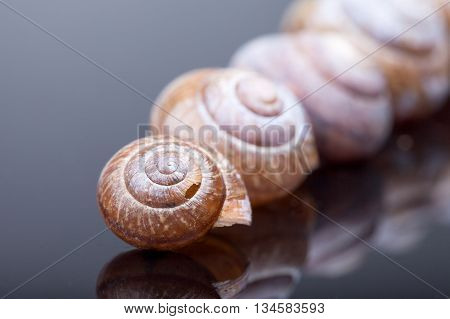 the number of empty spiral shell on black background