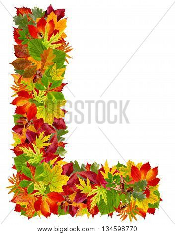 L autumn alphabet isolated on white background
