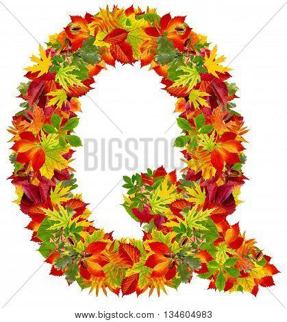 Q autumn alphabet isolated on white background