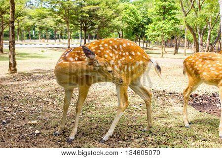 Deer patterned lovely spot deer in the wild
